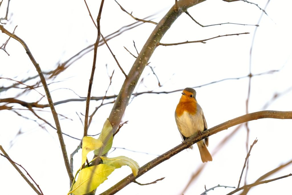 vogelbeobachtungen